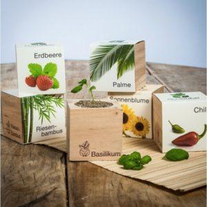 Plantes à faire pousser Ecocube