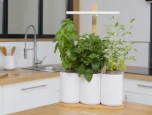 image-plantes-lilo